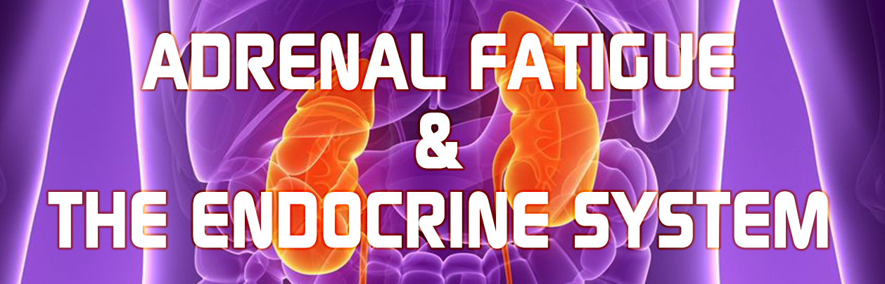 Adrenal fatigue and the endo system